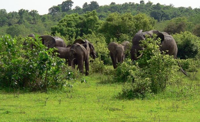Elephants at Mole National Park Ghana