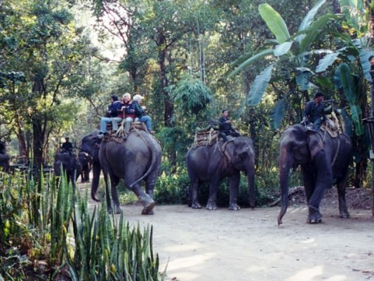 Elephants at Congo Jungle